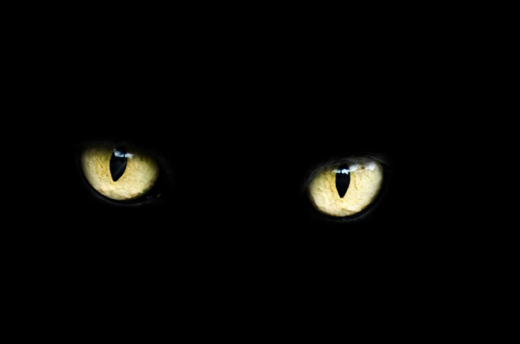 Only yellow eyes visible in a black background